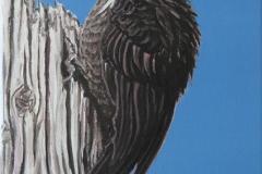 thewoodpecker